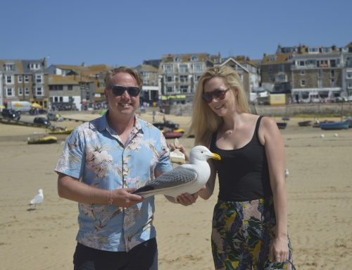 Spot the seagulls in St Ives this summer