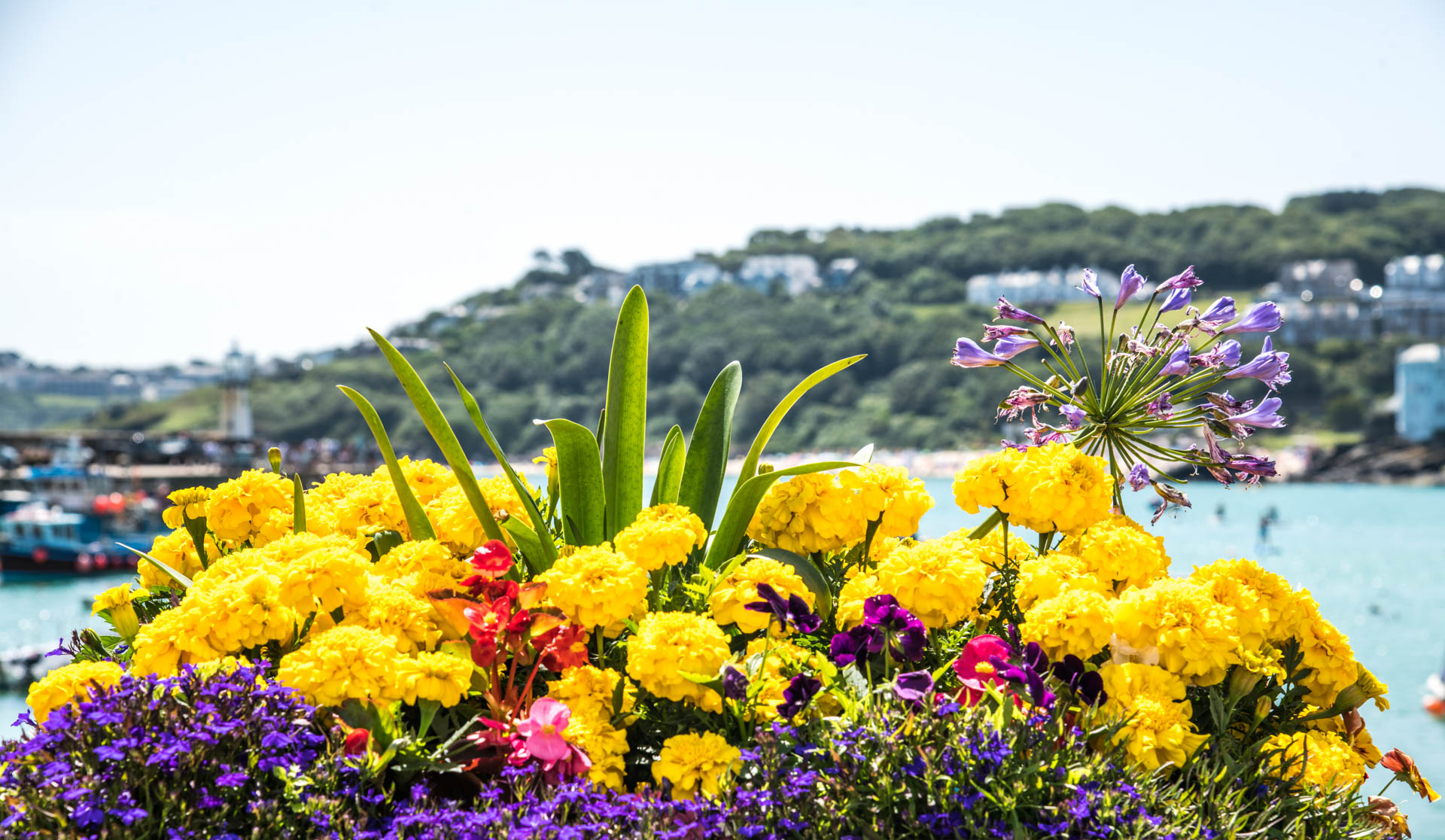 St Ives in Bloom Flowers 10