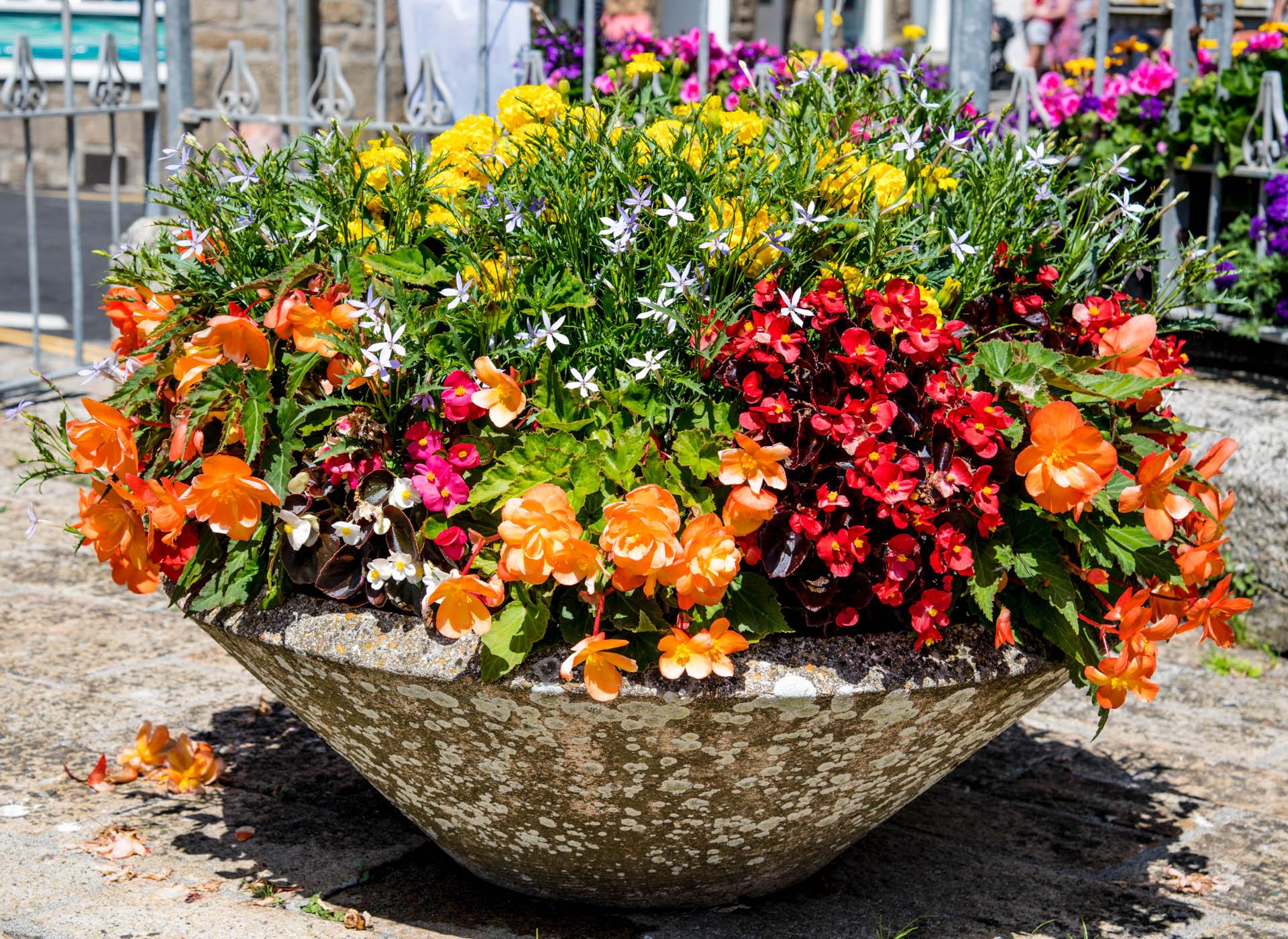 St Ives in Bloom Flowers 9